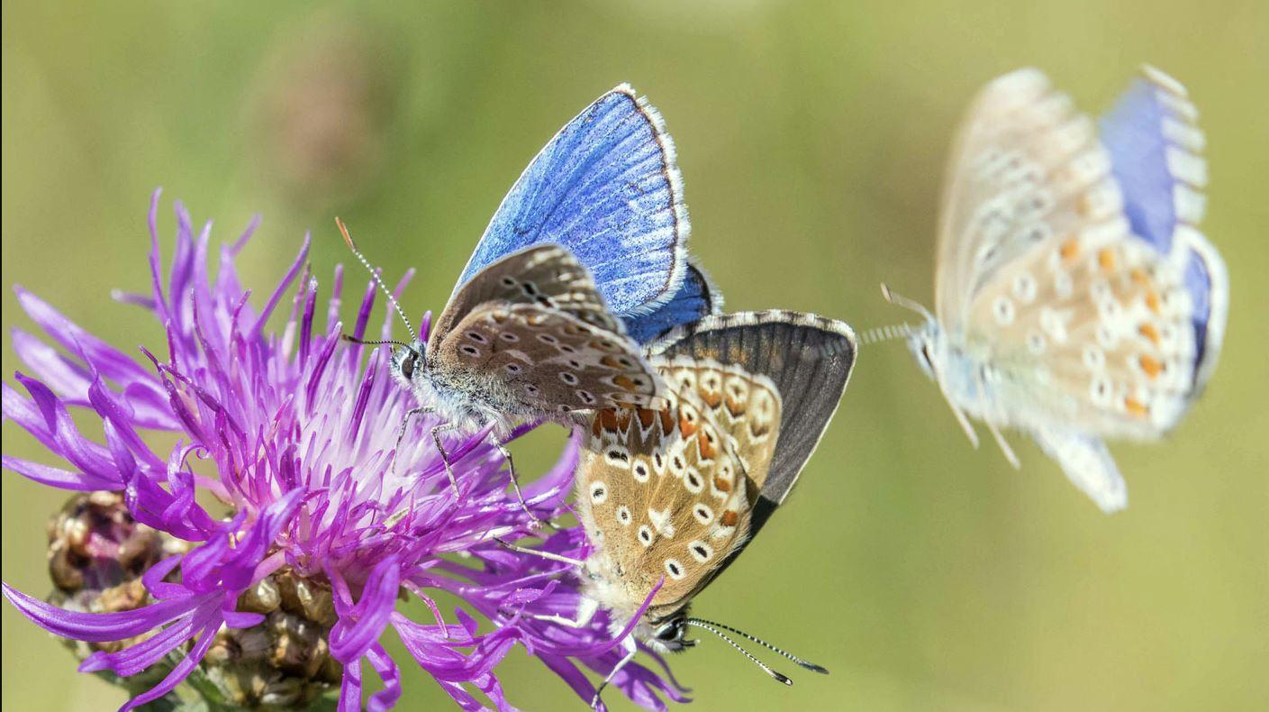 Ökofilmtour online: Rettet die Insekten!